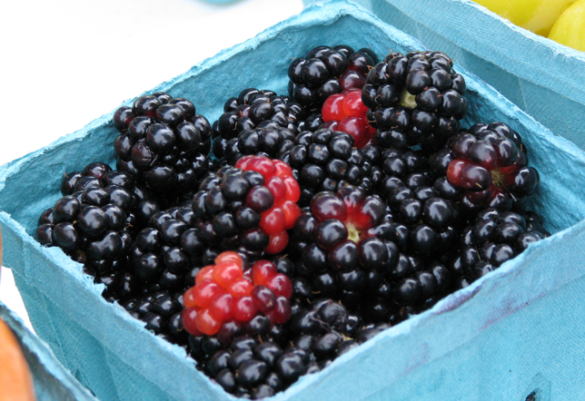 Difference between black raspberry and blackberry